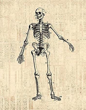 615oK1pJEzL._SY450_ amazon com antique skeleton diagram print medical anatomy wall art