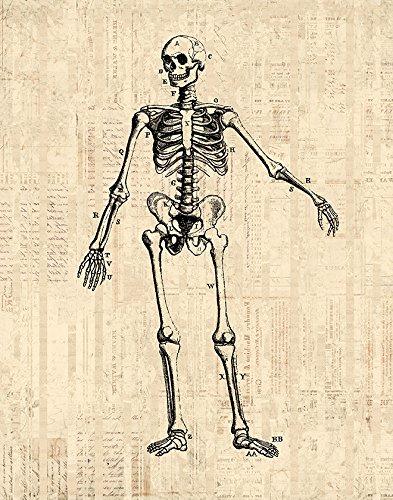 antique skeleton diagram print medical anatomy wall art & home decoration  scientific skeleton illustration in a