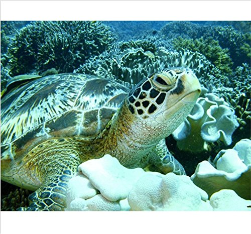 DIY Diamond Painting Cross Stitch Embroidery Sea Turtle Underwater World Mosaic Picture Rhinestones Wallpaper Graphics Decals