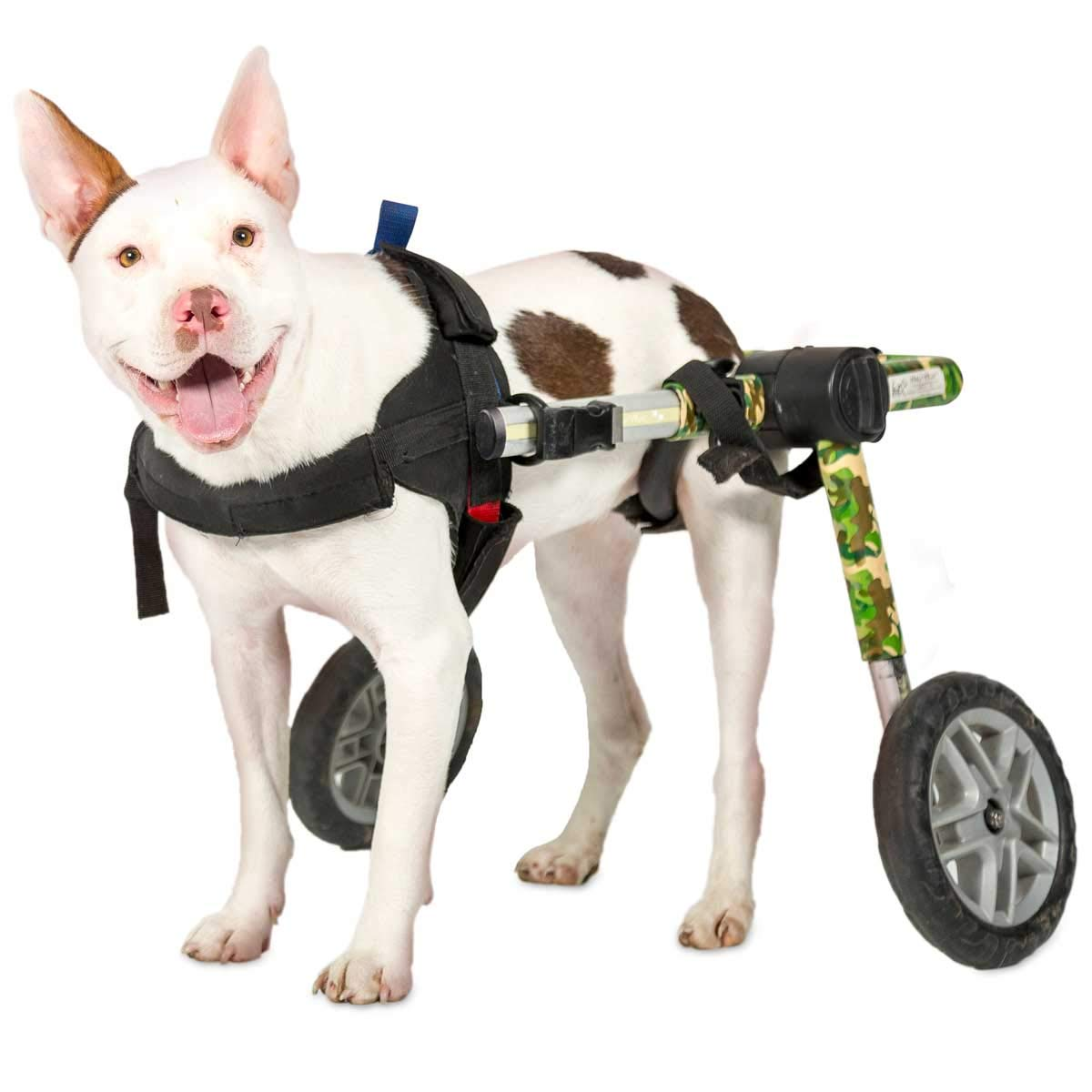 Camouflage 26-49 lbs, 10-13\ Camouflage 26-49 lbs, 10-13\ Dog Wheelchair For Medium Dogs 26-49 lbs Veterinarian Approved Wheelchair for Back Legs