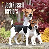 Jack Russell Terriers Dogs Wall Calendar 2018 {jg} Best Holiday Gift Ideas - Great for mom, dad, sister, brother, grandparents, , grandchildren, grandma, gay, lgbtq.