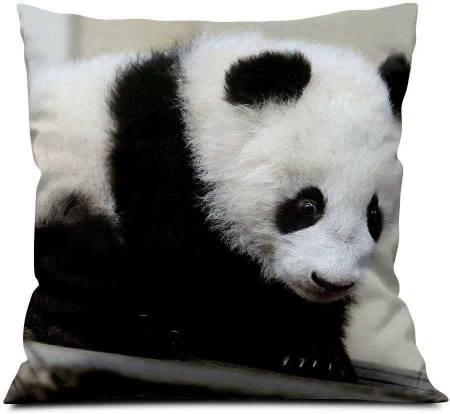 Giant Panda Cub Square Soft Cloth Throw Pillows Sofa Pillow Waist Pillow 18x18 Inch Home Kitchen