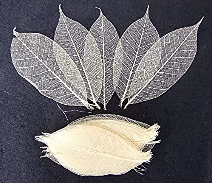 50x Green Clear Catbrier Skeleton Leaves for Scrapbooking DIY Craft