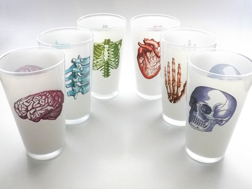 color Anatomy Beer Pint Glasses 16 oz. set of 6 anatomical heart nurse medical student doctor graduation gift