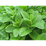 Exotic Herb Seeds - Mint Seeds For Home Garden - Selection Kitchen Garden Pack by Creative Farmer