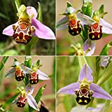 100Seeds Rare Smile Face Bee Orchid Flower Seeds Home Garden Plant