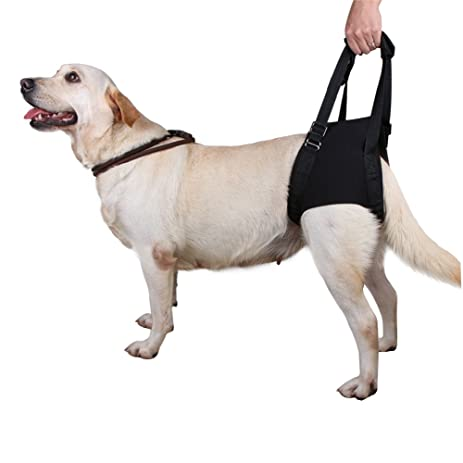 615t2R7cN%2BL._SY463_ amazon com lalawow dog support harness for rear legs injuries