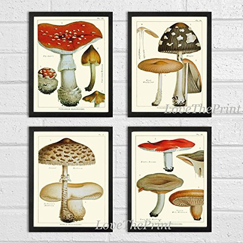 Mushroom Print Set of 4 Antique Botanical Beautiful Red Brown