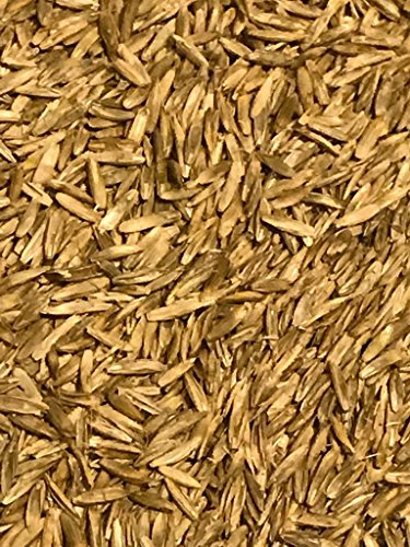 Annual RyeGrass Seed 5 lbs (Tetraploid) by OrOlam