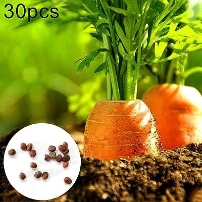 wpOP59NE 30Pcs Carrot Seeds Garden Bonsai Delicious Vegetable Nutrition Fruit Plants - 30pcs Carrot Seeds Plant Seeds : Garden & Outdoor