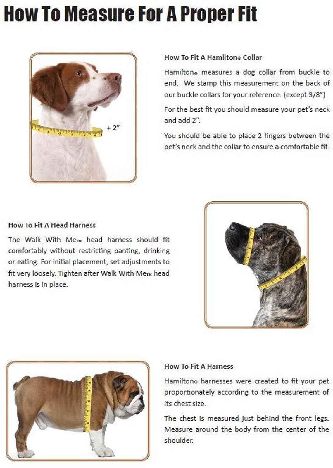 Hamilton Adjustable Dog Collar with Brushed Hardware B FAL 18/26 RS - 1