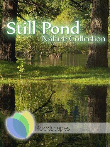 Moodscapes - Still Pond