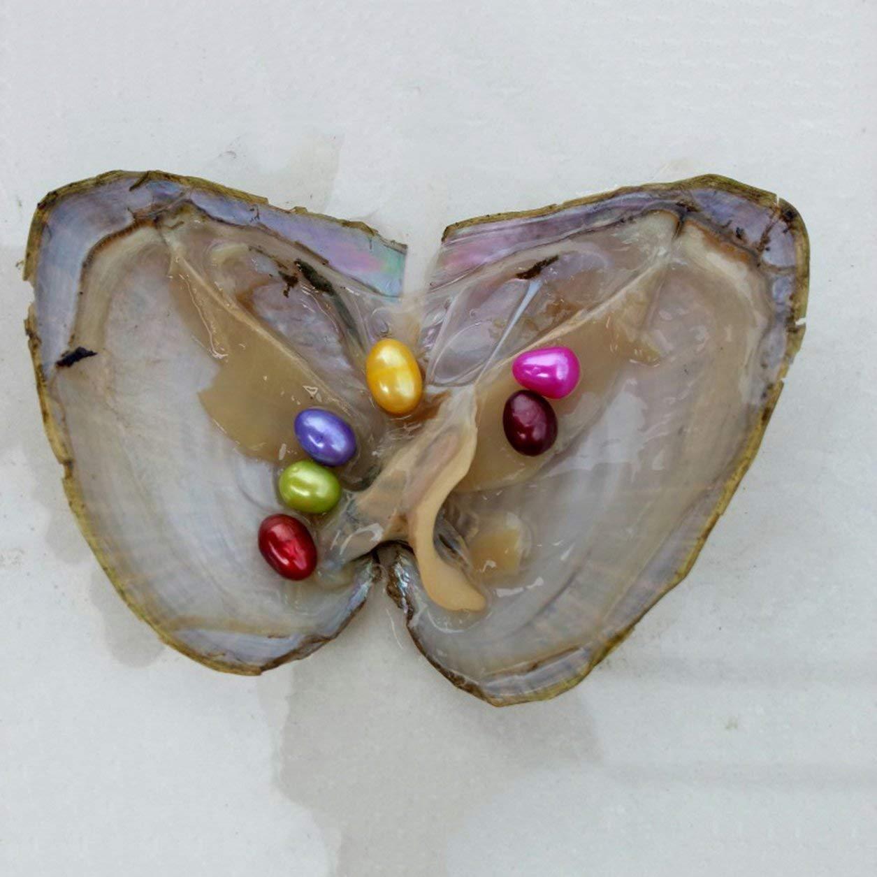 Dailyinshop Confezione sottovuoto Perle di ostriche Conchiglia di mitili con 6 perle all'interno di perla d'acqua dolce