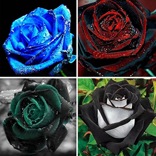 50pcs Black/Red/Blue/Green Rose Seeds for Planting Rare Flowers Garden Plants (Dark Green)