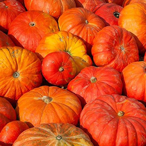 Cinderella Pumpkin Garden Seeds (Rogue VIF d'Etampes) - 4 oz - French Heirloom Pumpkins - Non-GMO - Red-Orange Variety - Vegetable Gardening -