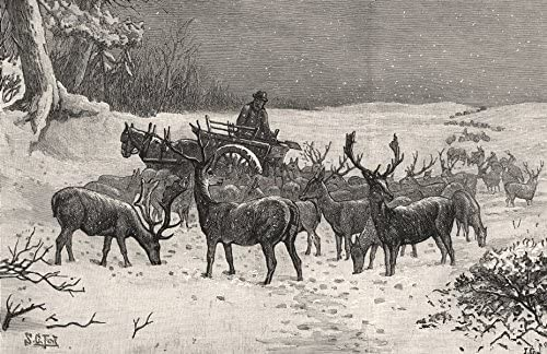 Amazon Com Feeding The Deer In Richmond Park During The Snow London 1887 Old Print Antique Print Vintage Print Printed Prints Of London Posters Prints