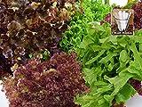 Baby Lettuce Mix Seeds 1300 Lettuce Seeds Upc 650327337091 +1 Free Plant Marker