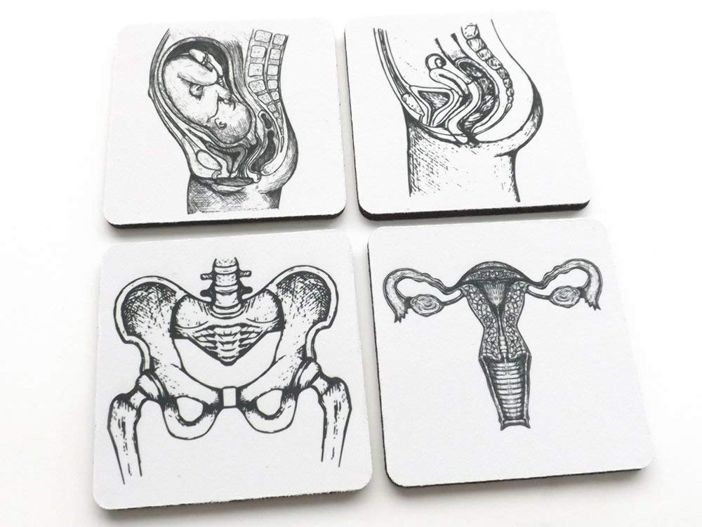 Female reproduction anatomy drink coasters set of 4 or 6 gynecologist obstetrician graduation gift