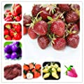 100pcs Climbing Strawberry Seeds Tree Seed 100% True Indoor Organic Very Delicious Fruit Seeds for Home & Garden Bonsai Seeds