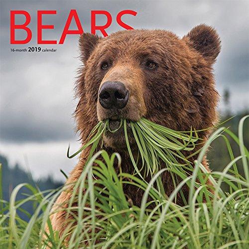 Bears 2019 12 x 12 Inch Monthly Square Wall Calendar by Wyman, Animals Wildlife Nature Bears (Bear Calendar)