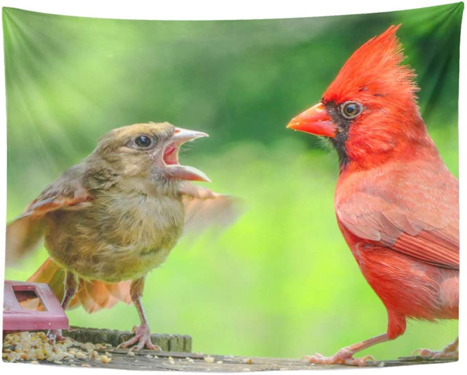 Sskbjtbdw Colorful Animal Male And Baby Cardinal In Tennessee Red Avian Tapestry Soft Polyester Cotton Appropriate Size Nice Wall Hanging Decoration Home Kitchen