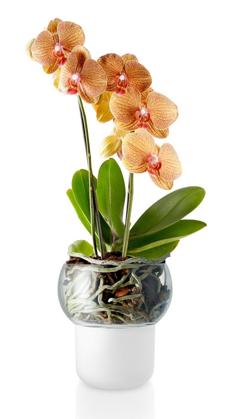 Eva Solo Solo Solo Vaso, Mehrfarbig, One Größe B06XG1ST4R Vasen e6c820