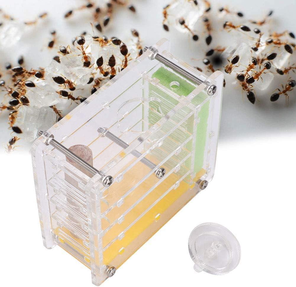 Sheens Nido de Hormigas Acrílico Hormiga Villa Hormiga Hormiga Granja Casa Pantalla de plástico Caja Cuadrada para la alimentación de Hormigas: Amazon.es: Productos para mascotas