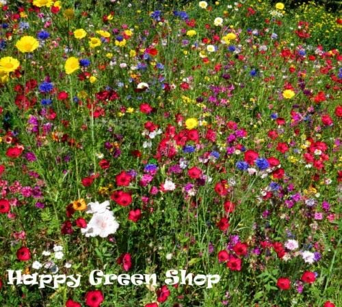 1g of seeds Butterfly Attractant Wildflower Seeds