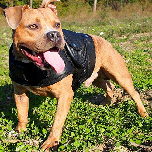 leather pitbull harness - 7