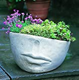Campania International P-175-GS Faccia Planter, Medium, Grey Stone Finish