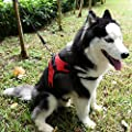 kiwitata Dog Harness- Leash Included,Dog Vest Halter Soft Padded Harness Leashes Set,Adjustable and Durable Harness for Pet All Size Dog Daily Training Walking Running