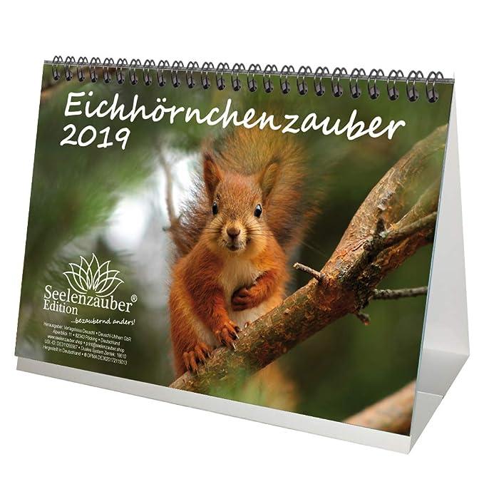 Calendrier 2019 « Eichhörnzauber »- Format DIN A5 - - Écureuils - Bois - Nature - Animal - Vie sauvage - Coffret cadeau avec 1 carte de vœux et 1 carte de Noël - Édition Seelenzauber