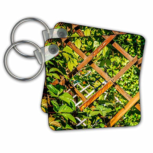 Alexis Photography - Summer - Wooden trellis grid and green garden plants - Key Chains - set of 2 Key Chains (Summer Trellis)