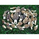 Morel Mushroom Spores Seeds Grow kit in Liquid 30 ml Gourmet Makes 16 sq ft