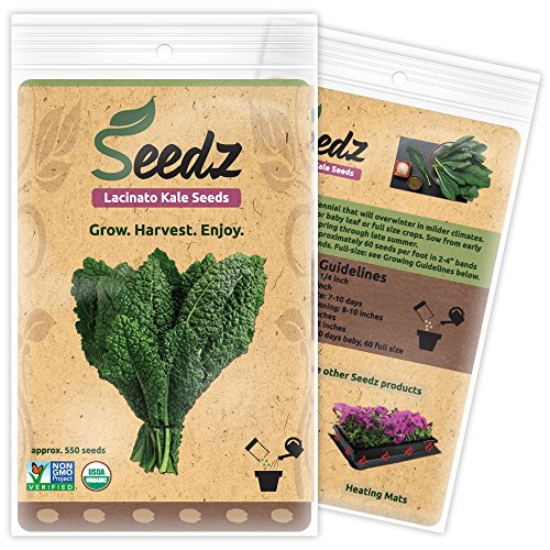 Organic Kale Seeds (APPR. 550) Lacinato Kale - Heirloom Vegetable Seeds - Certified Organic, Non-GMO, Non Hybrid -...
