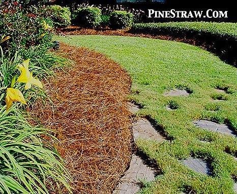 Pino paja mantillo – Agujas de pino acolchado – 3000sqft: Amazon.es: Jardín