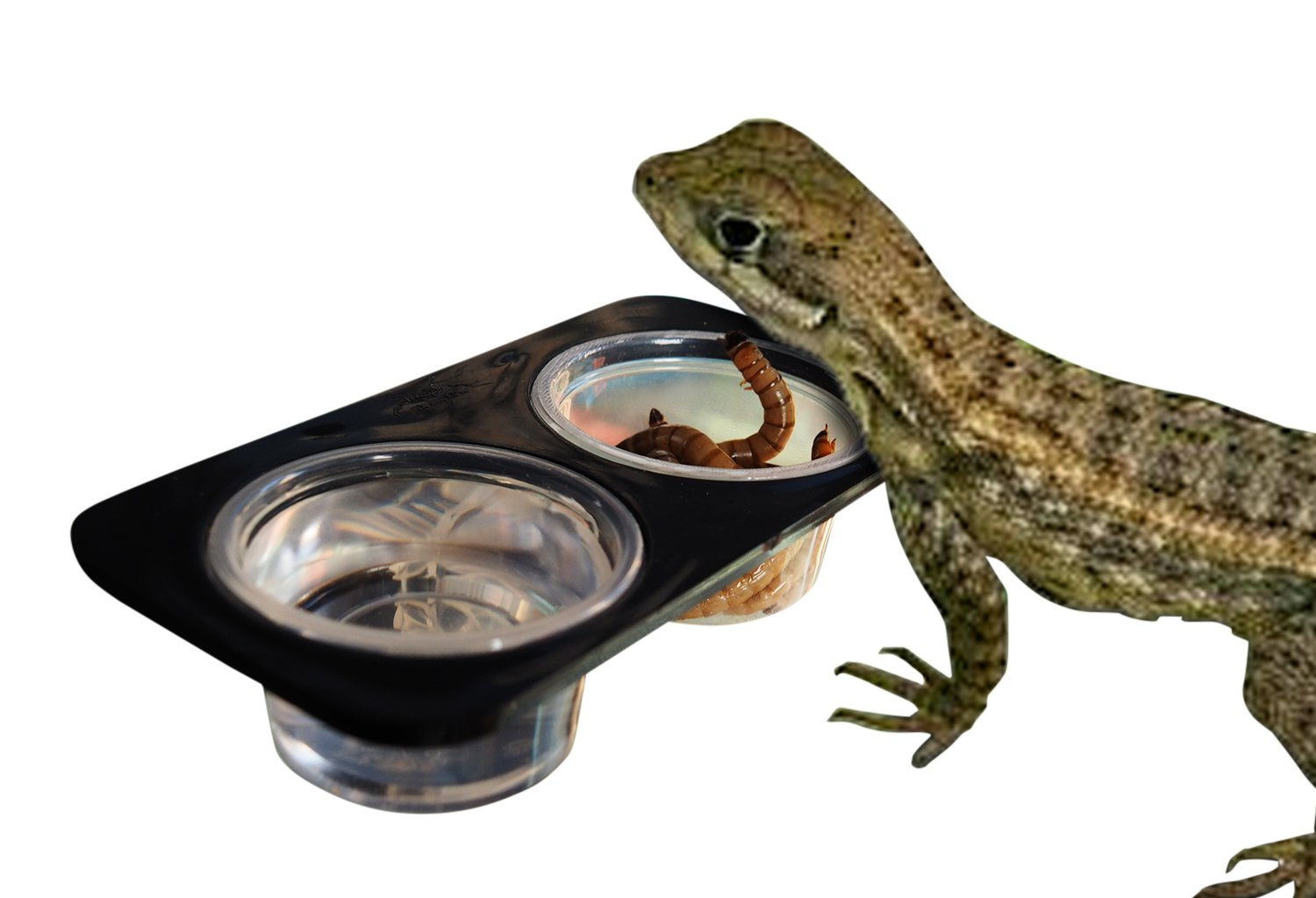 2 Bowls ABS Suction Cup Mini Worm Dish Reptile Gecko Food Bowl Ledge Feeder