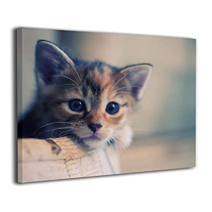 Amazon Com Lqz Paint Amazing Cats Inside Framed Canvas Painting