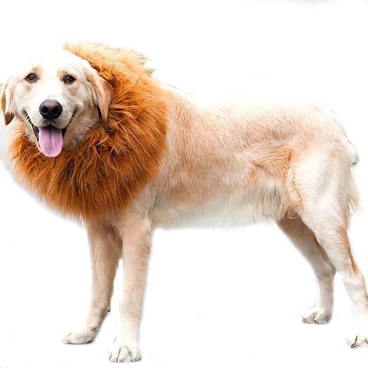 Suerte Se León Mane peluca para perro mascota Adorable Sombrero Vestido con Orejas de gato o perro gracioso de gato perro pequeño cachorro disfraz: Amazon.es: Productos para mascotas