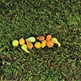 Fairy Garden - Mini Gourds - Assorted Set of 11