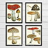 Mushroom Print Set of 4 Antique Botanical Beautiful Red Brown Mushrooms Forest Nature Home Room Decor Wall Art Unframed EAP