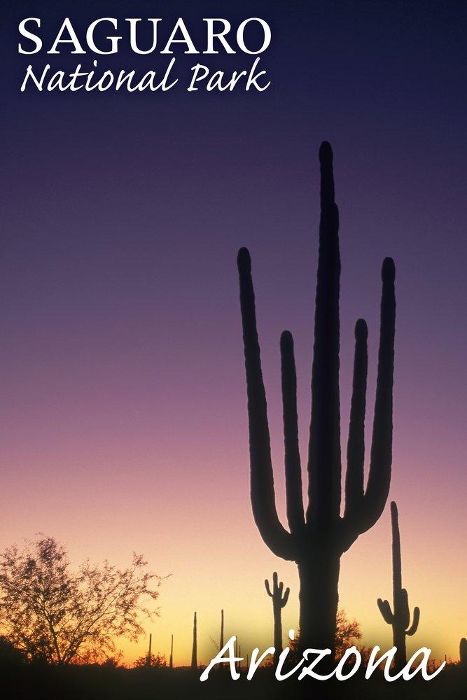 サワロ国立公園国立公園、アリゾナ州 – Cactus at Dawn 36 x 54 Giclee Print LANT-49476-36x54 36 x 54 Giclee Print  B017E9ZB8U