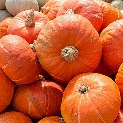 Sunshine Hybrid Winter Squash Garden Seeds - Non-GMO - Vegetable Gardening Seed - AAS Award Winner