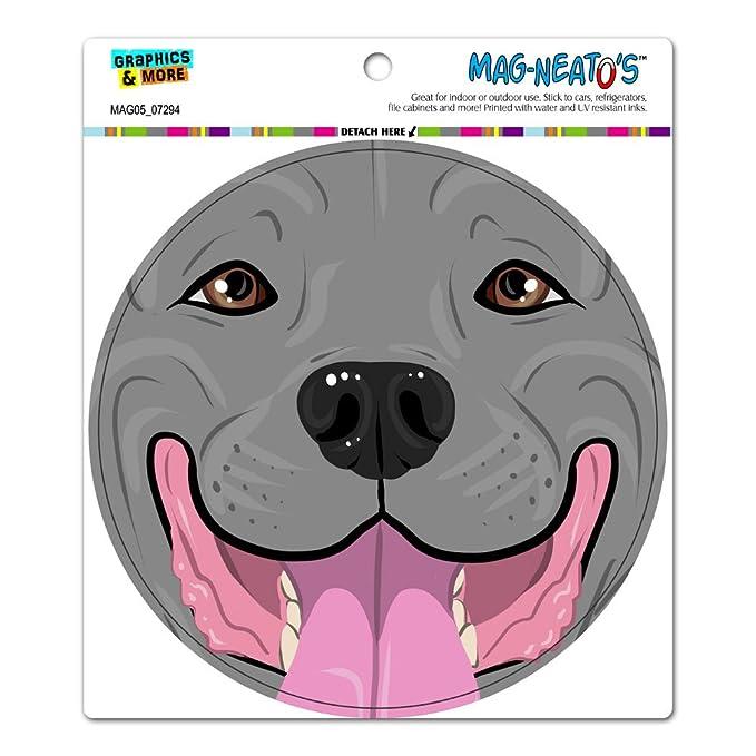 amazon com pit bull face blue nose pitbull close up pet dog