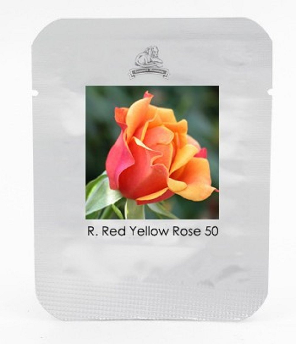 Amazon Rose Red Yellow Rose Plant Seed Strong Fragrant