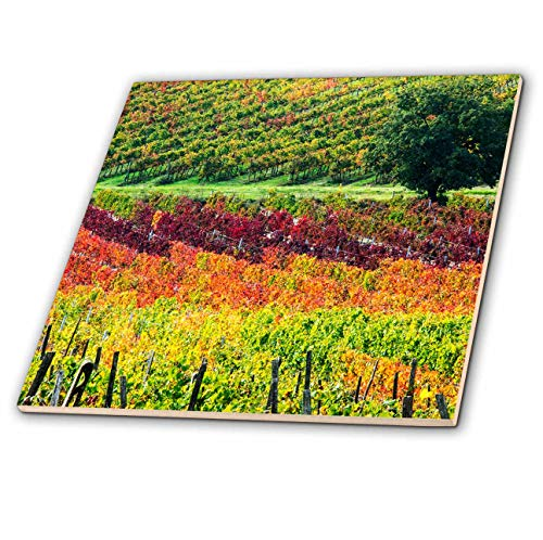 3dRose Danita Delimont - Agriculture - Italy, Tuscany, Autumn Vineyards near Montepulciano. - 6 Inch Glass Tile - Tuscany Porcelain Tile