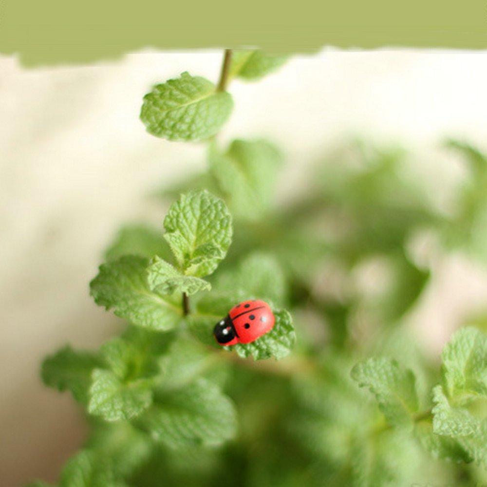 Amazon.com : 20 pcs Miniature Ladybug Plant Pots Bonsai Craft Self ...