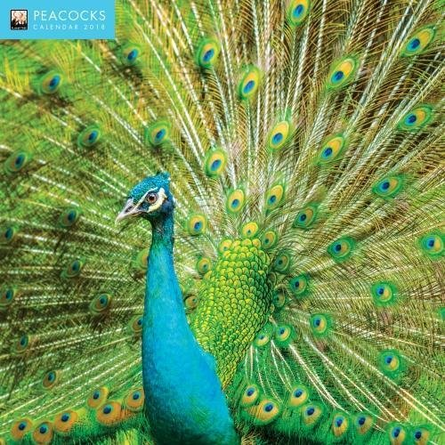 Peacocks 2018 12 x 12 Inch Monthly Square Wall Calendar by Flame Tree, Bird Birdwatching Ornithology