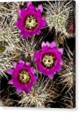 """Pink-flower Hedgehog Cactus"" by National Geographic, Canvas Print Wall Art, 11"" x 14"", Mirrored Gallery Wrap, Glossy Finish"