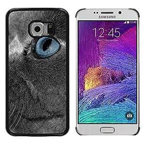 Be Good Phone Accessory // Dura Cáscara cubierta Protectora Caso Carcasa Funda de Protección para Samsung Galaxy S6 EDGE SM-G925 // Scottish Fold Grey Russian Blue Eye Cat